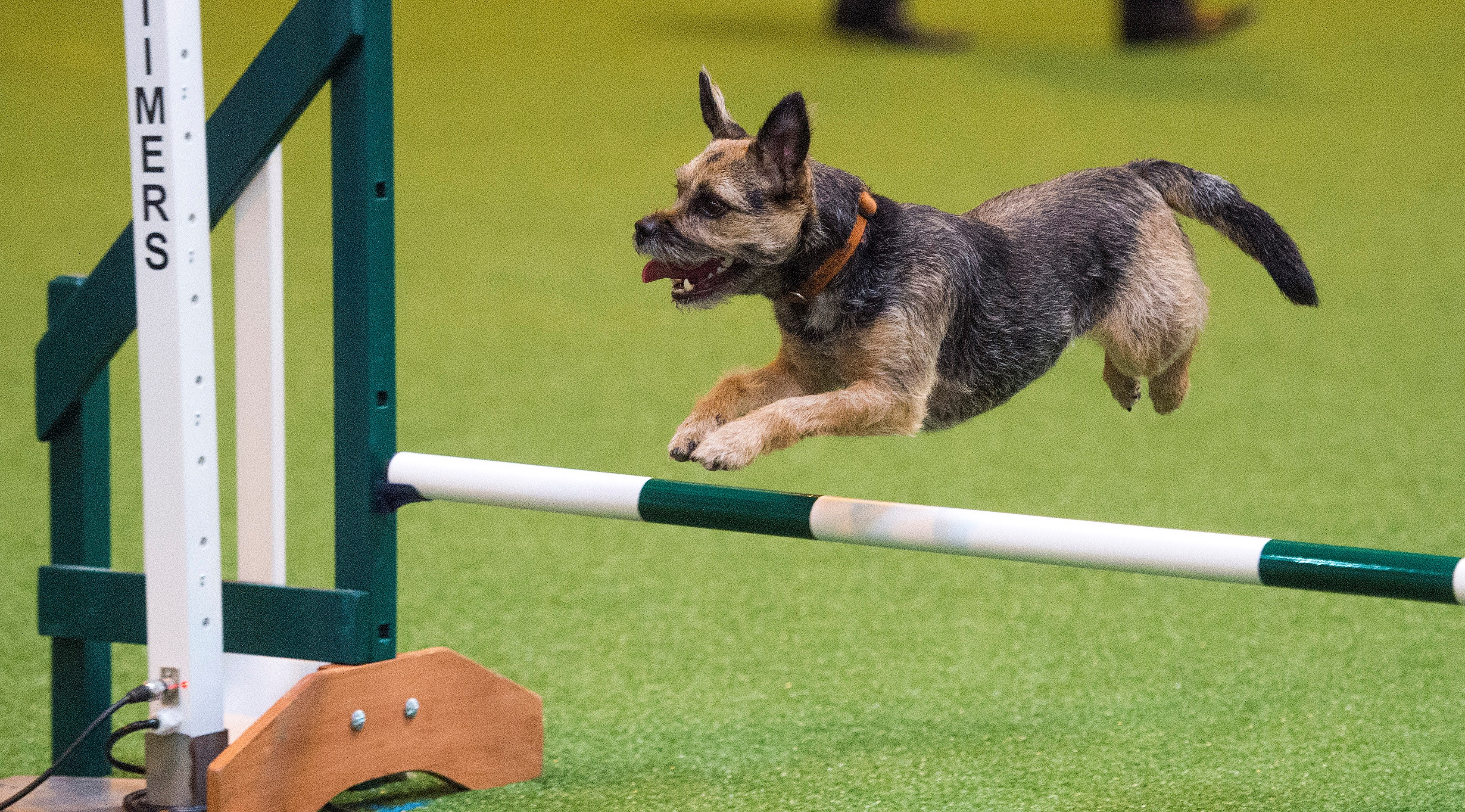 Tickets to Crufts 2017