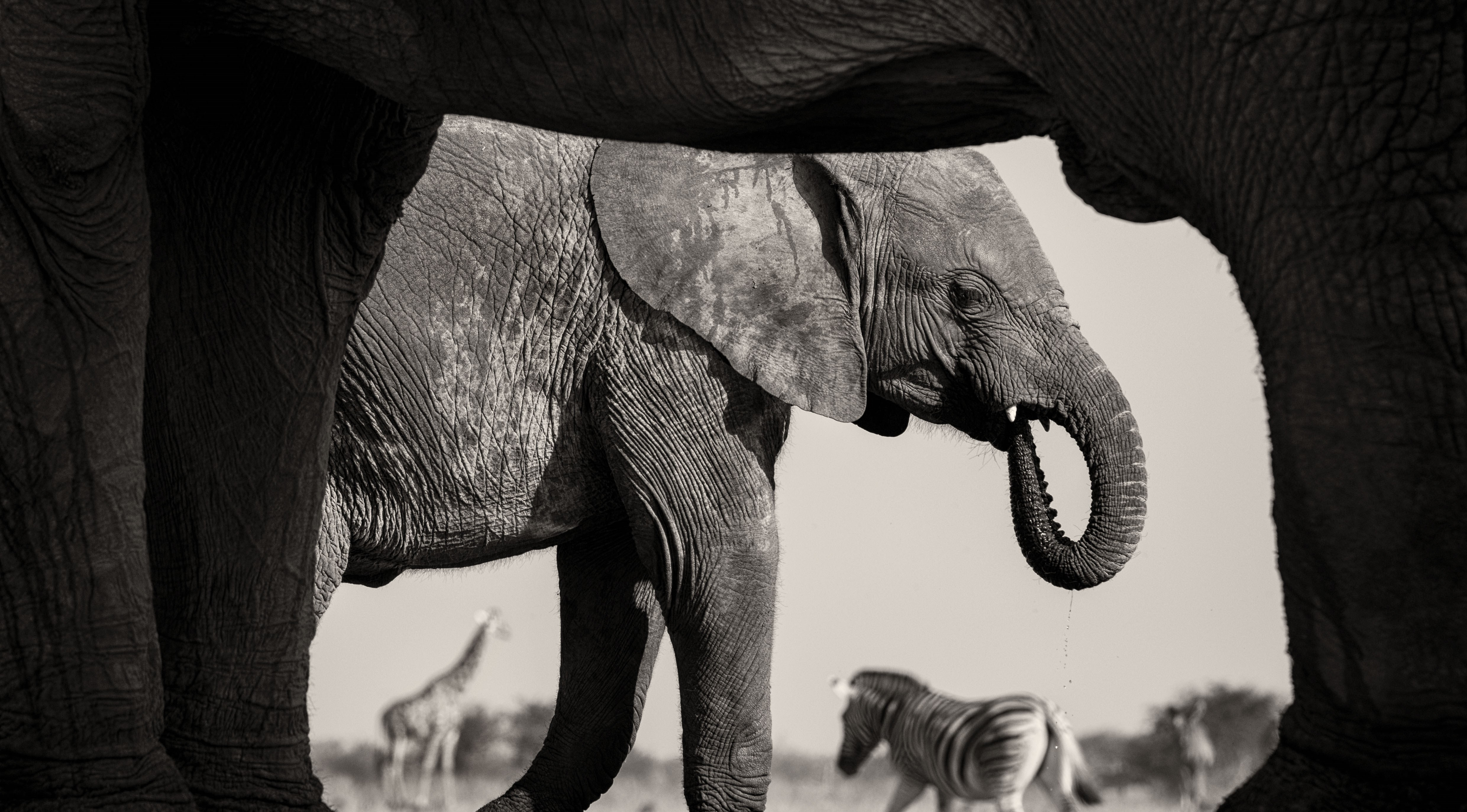 Wildlife Photographer of the Year exhibition returning to Wolverhampton Art Gallery
